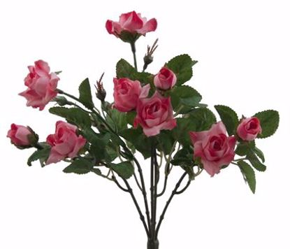 "Picture of 12"" Pink/Mauve Wild Rose Bush x 5"
