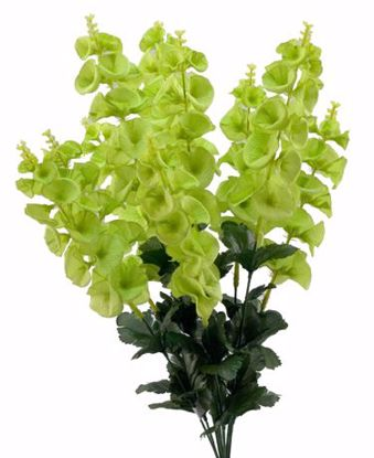 """Picture of Green Bell of Ireland Bush (10 Stems, 25"""")"""
