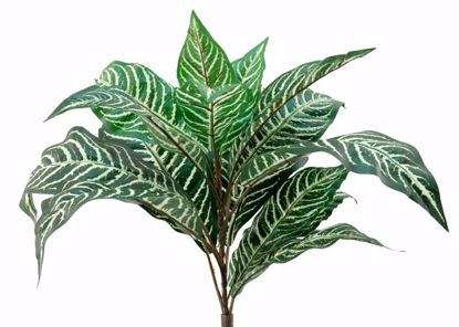 "Picture of 15"" Zebra Bush x 16 Leaves"