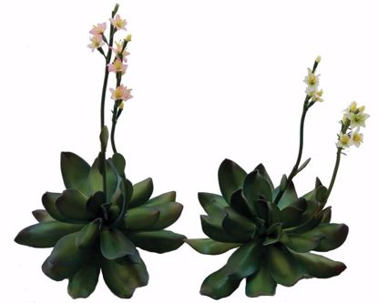 Picture of 2 Assorted Pink/Cream Succulent Gypso Pick