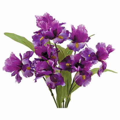 "Picture of 18"" Purple Iris Bush x 8"