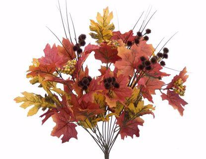 "Picture of Autumn Leaves Maple Oak Berry  Bush (14 Stems, 20"")"