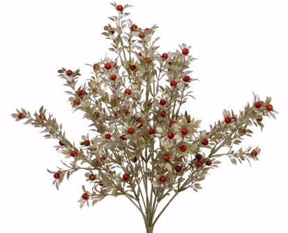 """Picture of 18"""" Mica Berry Small Leaves Bush x 12"""