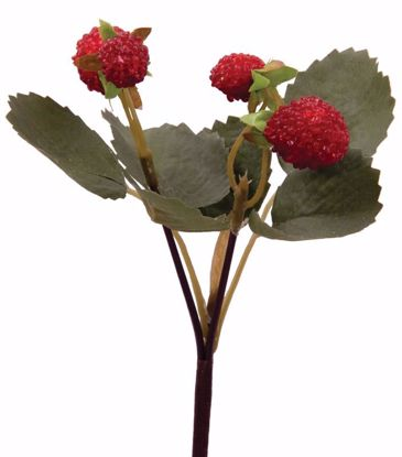 Picture of Burgundy Raspberry Pick
