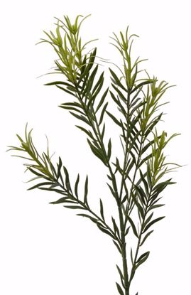 """Picture of 31"""" Rosemary Spray"""