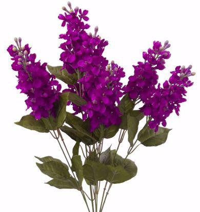 "Picture of 22"" Lilac Bush x 8"