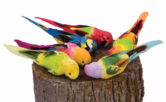"""Picture of 6 Assorted 5.25"""" Tropical Birds w/Clips"""