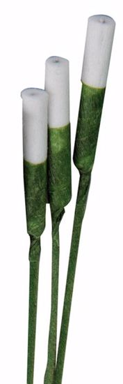 Picture of Stay Fresh Stephanotis Stems - Green