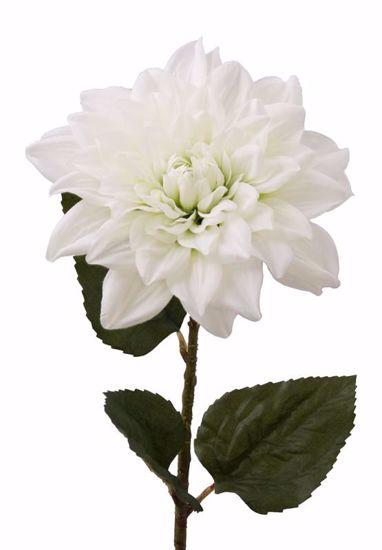 "Picture of 30"" White Dahlia Stem"