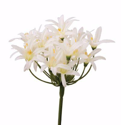"""Picture of Cream Tweedia Stem (24.5"""")"""