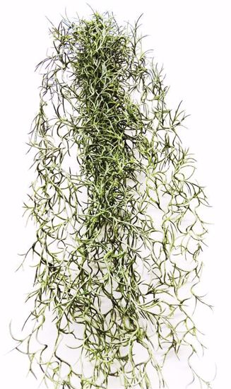 "Picture of 27"" Air Plant Bush"