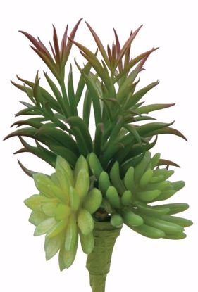 "Picture of 11"" Mix Succulent Pick"