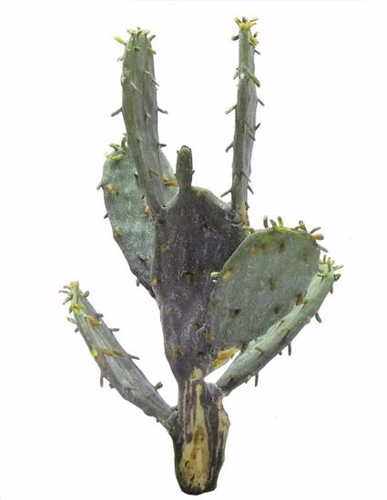 "Picture of 9"" Cactus Pick"