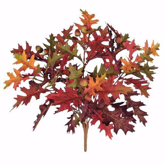"Picture of 19"" Oak Leaf Bush x 6"
