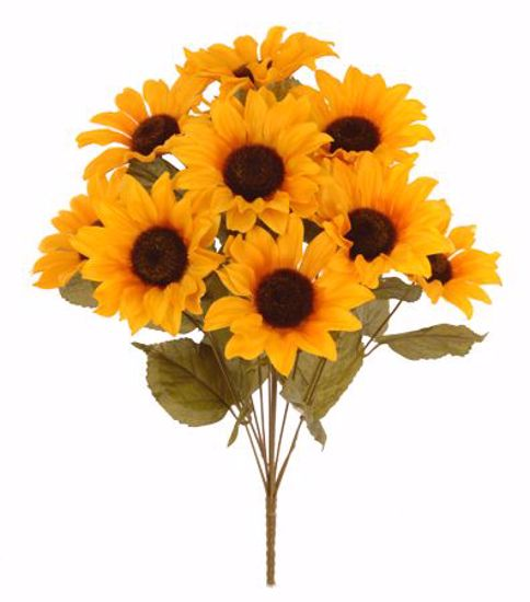 """Picture of 18"""" Sunflower Bush x 11"""