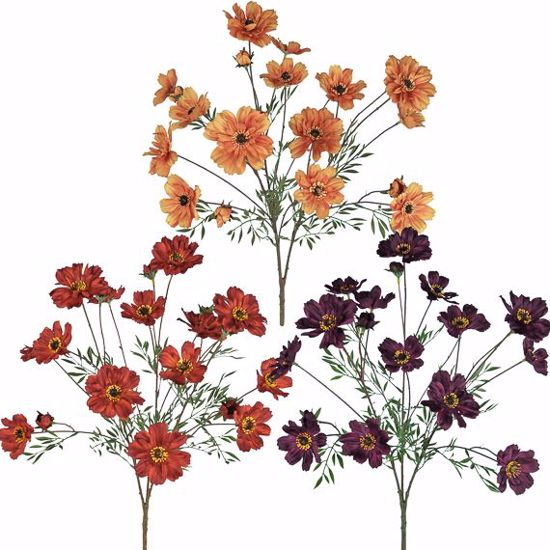 """Picture of Fall Colors Cosmos Bush  (23"""", 3 Assorted Colors)"""