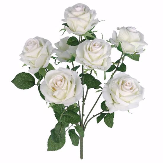 "Picture of 18"" Cream Royal Rose Bush x 6"