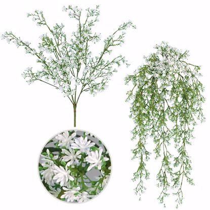 Picture of White Sedum Seed  Bush-Vine (7 to 9 Stems, 2 Assorted)