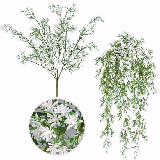 Picture of White Sedum Seed Bush/Vine x 7-9 (2 Assorted)