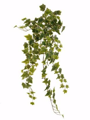 """Picture of 36"""" Real Touch Variegated Ivy Indoor/Outdoor Stem x 14"""