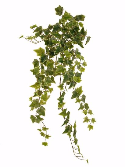 "Picture of 36"" Real Touch Variegated Ivy Indoor/Outdoor Stem x 14"