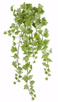"""Picture of 30"""" Real Touch Spring Ivy Stem x 14"""