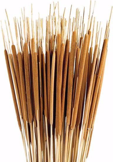 Picture of Dark Brown Pencil Cattails