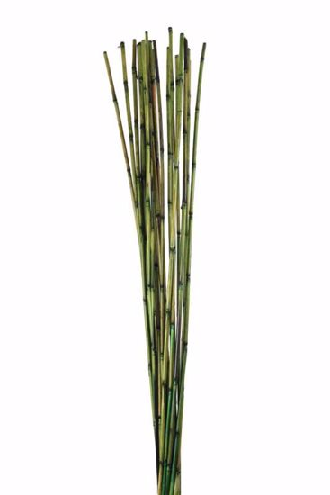 Picture of Bamboo/Rivercane - Moss