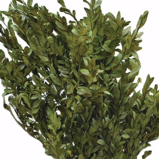 Picture of Green Boxwood (5 oz)