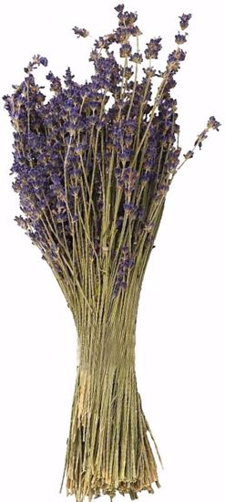 Picture of Natural Lavender (3.5 oz)