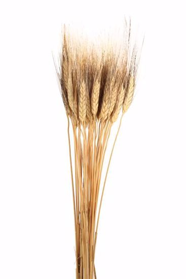 Picture of Black Beard Wheat - Natural
