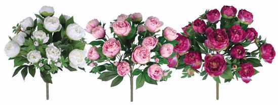 """Picture of Spring Colors Peony Bush (3 Assorted Bushes, 22"""")"""