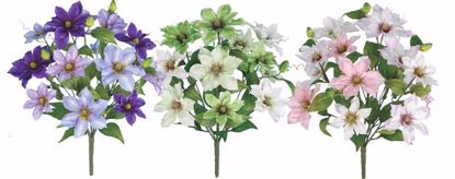 """Picture of 3 Assorted 20"""" Clematis Bush"""