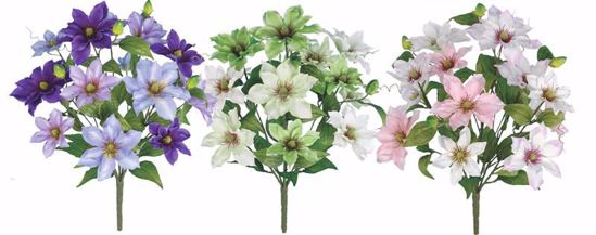 "Picture of 3 Assorted 20"" Clematis Bush"