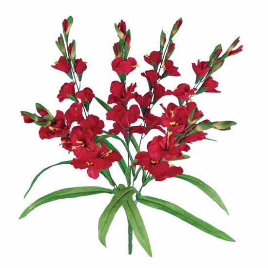 """Picture of 26"""" Red Gladiolus Bush x 6"""