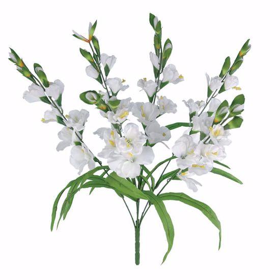 "Picture of 26"" White Gladiolus Bush x6"