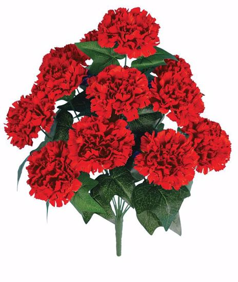 "Picture of 20"" Red Carnation Bush x 12"