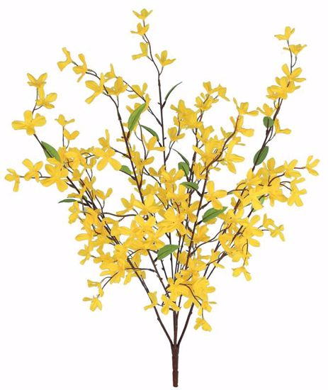 """Picture of Forsythia Bush (5 Stems, 30"""")"""