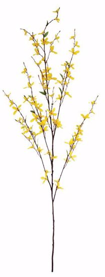 "Picture of 51"" Forsythia Branch x 5"