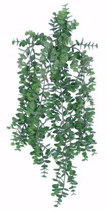 "Picture of 26"" Eucalyptus Bush/Vine"