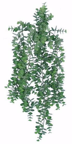 "Picture of 26"" Eucalyptus Bush/Vine"
