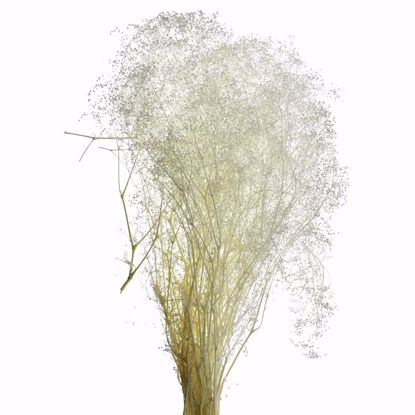 Picture of Bleached Stardust Gypsophila