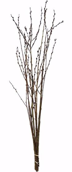Picture of Natural Pussy Willow Stems 3-4'