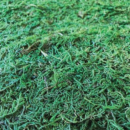 Picture of Green Moss Runner 4'