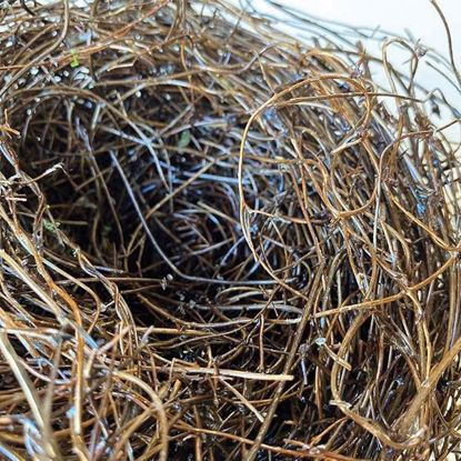 Picture of Natural Birds Nest
