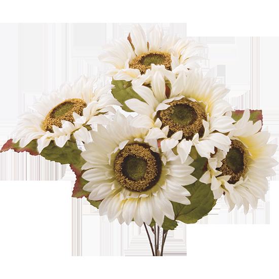 "Picture of 19"" White Sunflower Bush x 5"