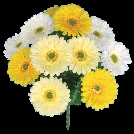 "Picture of Cream-White-Yellow Gerbera Daisy Bush-12 Stems, 20"""