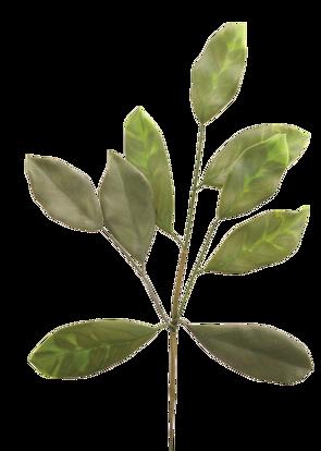 "Picture of Magnolia Leaf Spray (20"")"