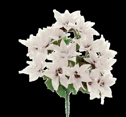 """Picture of White Poinsettia Bush (17"""")"""