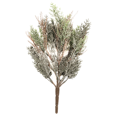 """Picture of Evergreen Bush-Frosted Cypress (15.5"""")"""